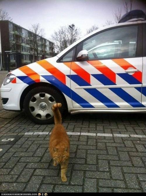 Meet Garfield, Police-Cat in Delft, The Netherlands