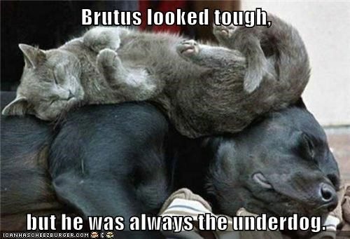 Brutus looked tough,  but he was always the underdog.