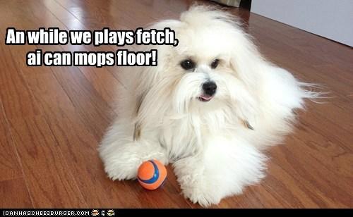 fetch,mop,ulterior motives,funny