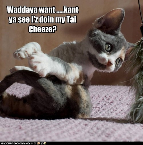 Waddaya want .....kant ya see I'z doin my Tai Cheeze?