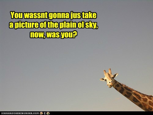 sky,giraffes,picture,dull,funny