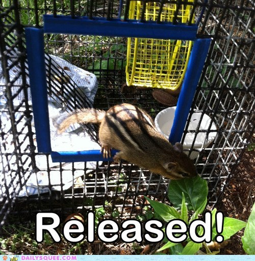 Rescued Baby Chipmunk Gets Released! animalrescuelg An Open Door Animal Shelter, Wildlife Rehabilitation Center, & Veterinary Wellness Clinic in Pittsburgh, PA.