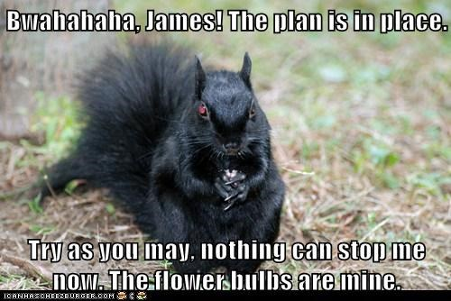 Bwahahaha, James! The plan is in place.  Try as you may, nothing can stop me now. The flower bulbs are mine.