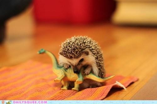 attack,dinosaur,hedgehog,pet