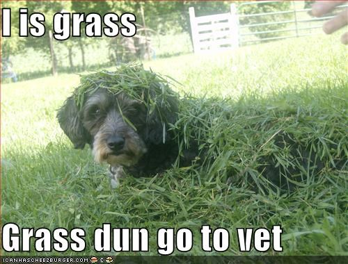 I is grass  Grass dun go to vet