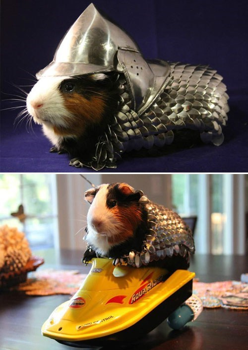 Shut Up and Take My Money of the Day: A Guinea Pig Armor Suit