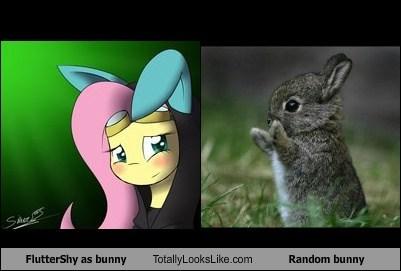 FlutterShy as bunny Totally Looks Like Random bunny
