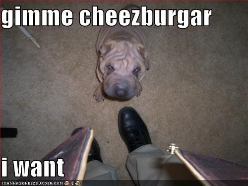 gimme cheezburgar  i want