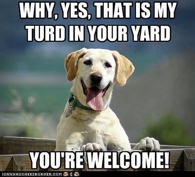 turd,yard,funny,neighbor