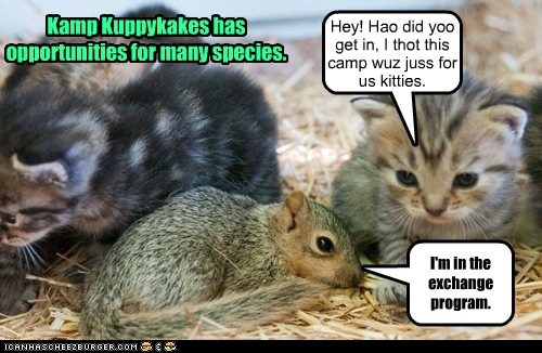 Kamp Kuppykakes has opportunities for many species.