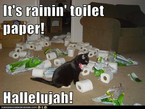 It's rainin' toilet paper!  Hallelujah!