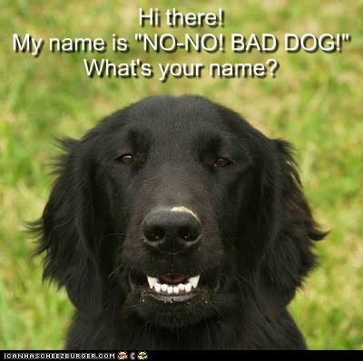 "Hi there!  My name is ""NO-NO! BAD DOG!""  What's your name?"