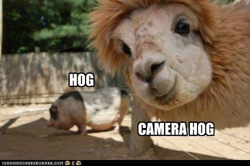 Photobomb Llama
