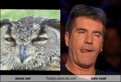 simon owl Totally Looks Like simn cowl