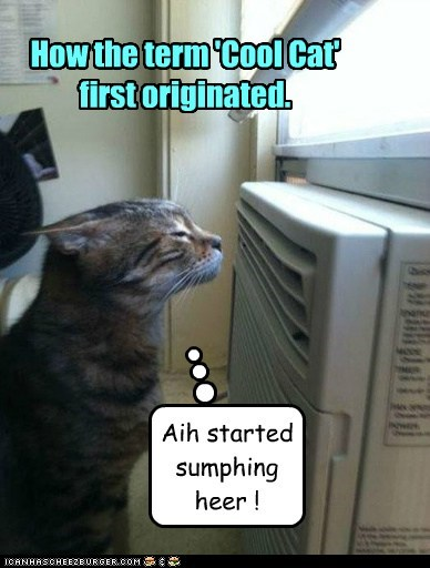 How the term 'Cool Cat' first originated.