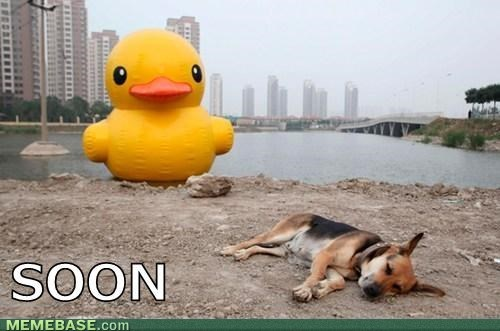 The duck waits for no dog...