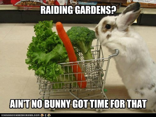 Shopping Is Faster by a Hare