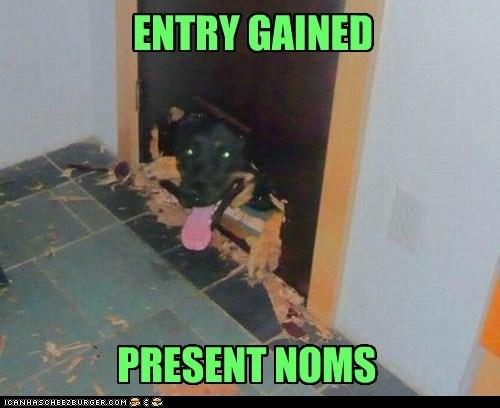 destructive,noms,funny,dog door