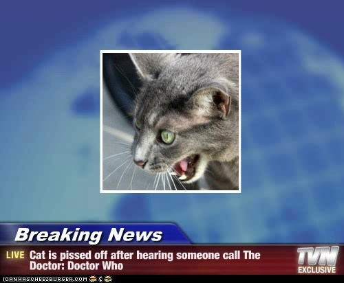 Breaking News - Cat is pissed off after hearing someone call The Doctor: Doctor Who