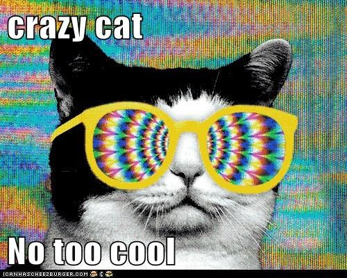 crazy cat  No too cool