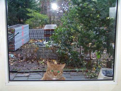 i seez you, now let me in!