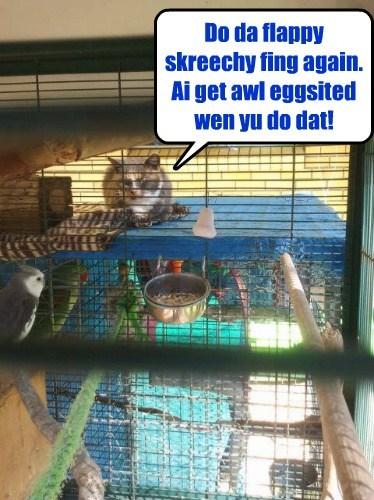 Yu birds ar so much fun!