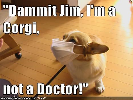 """Dammit Jim, I'm a Corgi,  not a Doctor!"""