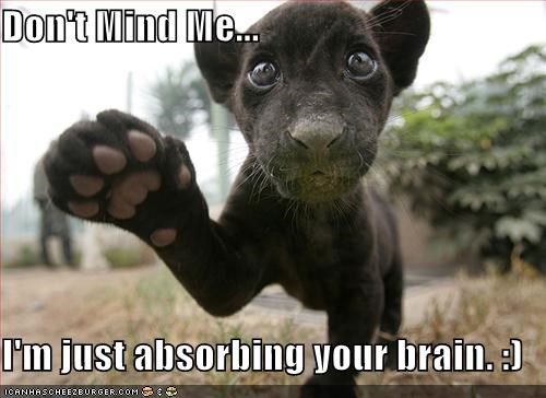 Don't Mind Me...  I'm just absorbing your brain. :)