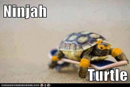Ninjah   Turtle
