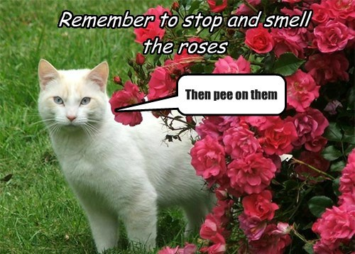 Feline Proverb