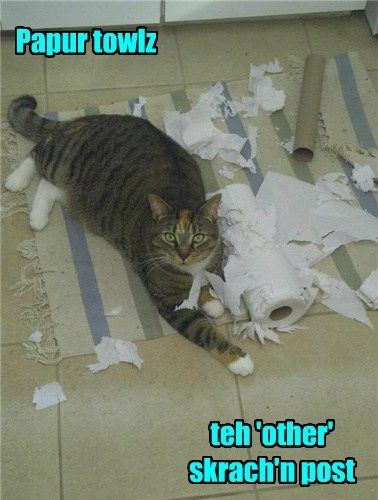 scratching post,paper towels,funny