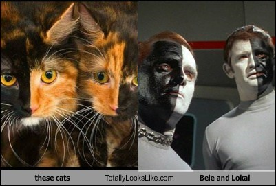 Aliens,totally looks like,Star Trek,Cats,funny