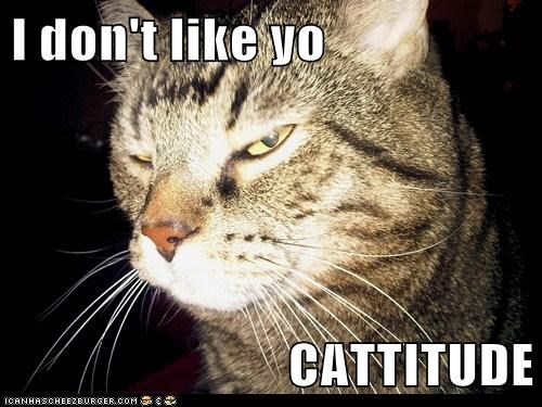 I don't like yo  CATTITUDE