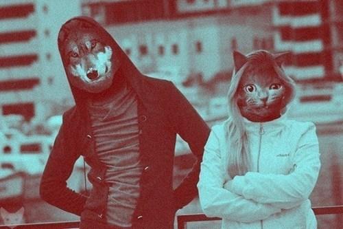 wolves,wtf,Cats,funny,seems legit