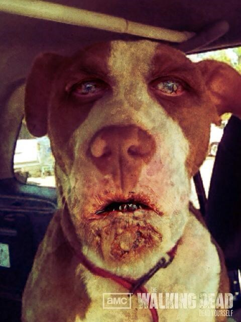 Using The Walking Dead App on Animals Creates Nightmares
