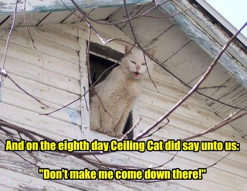 "And on the eighth day Ceiling Cat did say unto us:  ""Don't make me come down there!"""