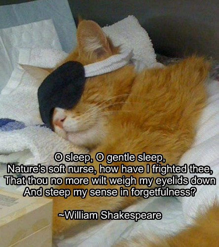 To sleep, purrchance to dream...