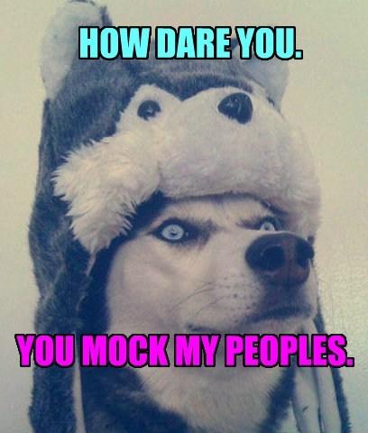 mocking,husky,hat,funny