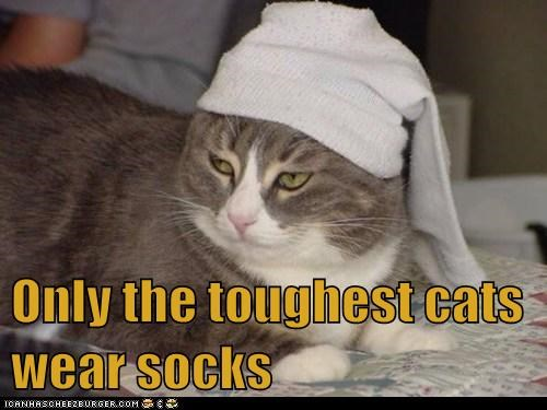 Only the toughest cats wear socks