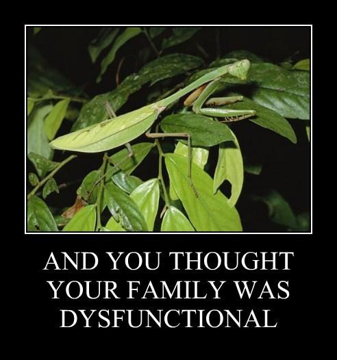 cannibal,praying mantis,mom,funny