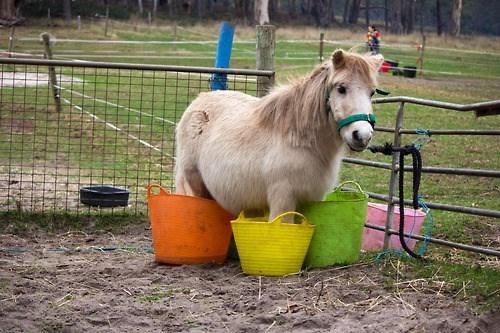 pony,cute,buckets,fabulous