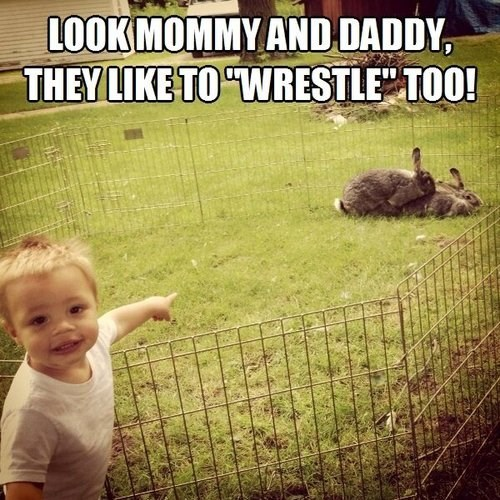 My Parents Wrestle Like Rabbits!