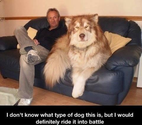 Dire Wolf?