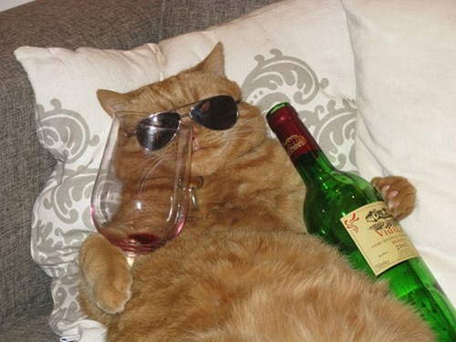 Crunk Critters: The Cool Cats Drink Wine