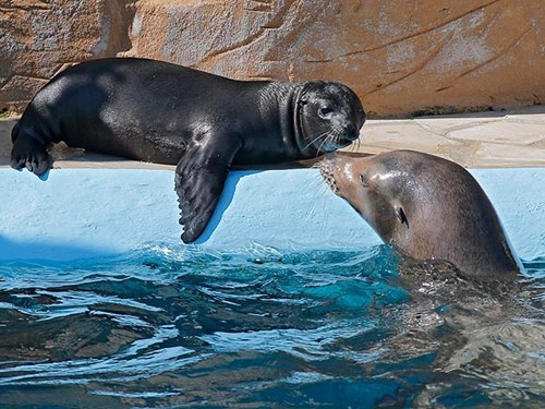 Baby Sea Lion Soaks Up the Sun with Mom