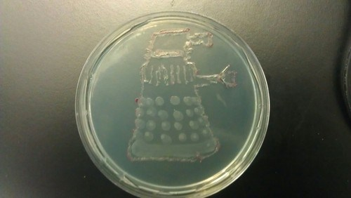 Bio Art of the Day: Dalek Grown in a Petri Dish