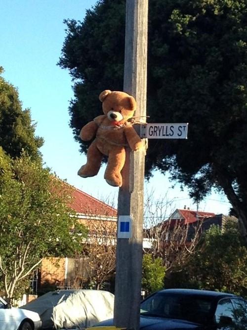 sign,bear grylls,puns,funny