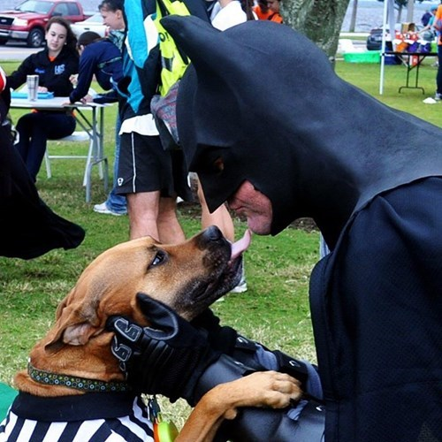 Can You Give This Batdog a New Bat Cave?