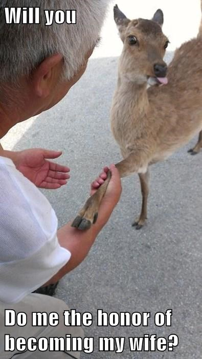 proposal,deer,funny