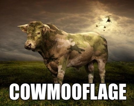 puns,camouflage,funny,cows
